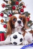 Animal familier animal de chien de Noël de Noël Beau chien cavalier amical d'épagneul de roi Charles Chien qualifié canin de race Images libres de droits
