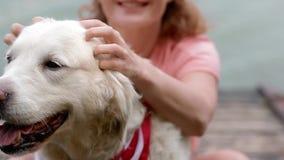 Animal familier de femme son Labrador avec le bandana du drapeau am?ricain banque de vidéos