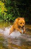 Animal familier de l'eau Image stock