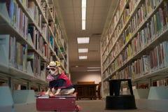 Animal familier drôle de chien dans le costume Photographie stock libre de droits