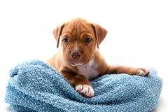 Animal familier et essuie-main Photo stock