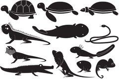 Animal familier exotique illustration de vecteur