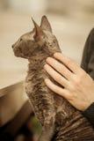 Animal familier humain de main et de chat à la maison Photos libres de droits
