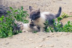 Animal familier mignon de b?te perdue de chat de chaton homeless photos stock