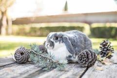 Animal familier mignon de lapin marchant sur une table en bois avec des pins extérieurs Photographie stock libre de droits