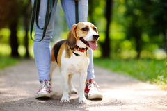 Animal familier obéissant avec son propriétaire Photos libres de droits
