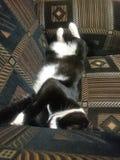 Animal familier paresseux Photographie stock libre de droits
