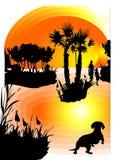 Animal familier regardant le coucher du soleil Images libres de droits
