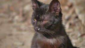 Animal familier sans abri de chat de vieil écoulement nasal liquide malade de morve extérieur banque de vidéos