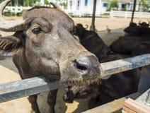 Animal farm living feeding fence concept Royalty Free Stock Photos