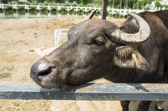 Animal farm living feeding fence concept Royalty Free Stock Image