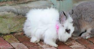 Animal on a farm, rabbits stock video
