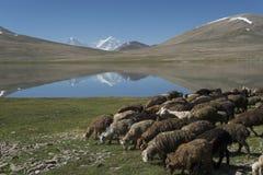 Animal farming in mountains Royalty Free Stock Photo