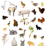 Animal Farms Stock Photography