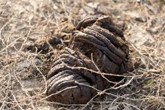 Animal feces on the ground. In the park in nature Stock Photos