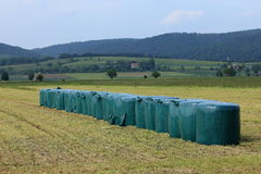 Animal feed from grass silage Royalty Free Stock Images