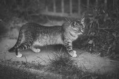 Animal felino, doméstico, mamífero fotos de archivo