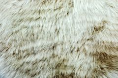 Animal fell texture background f Royalty Free Stock Photo