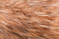 Animal fell texture Royalty Free Stock Images