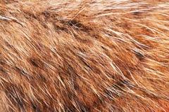 Animal fell texture Royalty Free Stock Photos