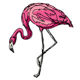 Animal flamingo bird pink contour zoo Royalty Free Stock Photo