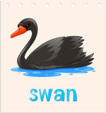 Animal flashcard with swan on water Royalty Free Stock Photo