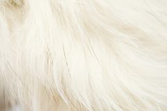 Animal fluff. On the white background Royalty Free Stock Photos