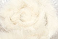 Animal fluff. On the white background Stock Photography