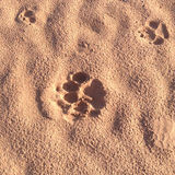 Animal Foot Print Background Royalty Free Stock Image