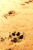 Animal foot print Stock Image