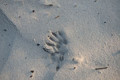 Animal foot prints in the sand stock photos