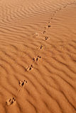 Animal foothpath in the sand. Animal foothpath in the desert sand. Namib desert in Namibia Royalty Free Stock Photo