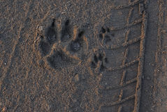 Animal footprint Royalty Free Stock Images