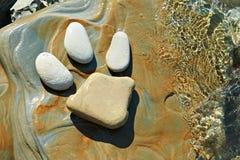 Animal footprint in stone Royalty Free Stock Photo