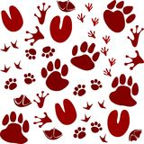 Animal Footprint Track. Vector illustration isolated on white background Royalty Free Stock Photography