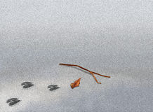 Animal Footprint with Twigs and Leaf on Sand with Stock Images
