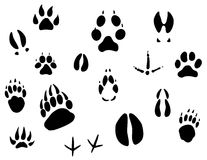 Animal footprints Royalty Free Stock Photos