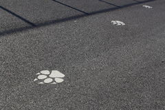 Animal Footprints Royalty Free Stock Images