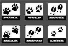 Animal footprints Stock Image