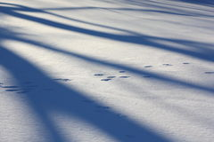 Animal footprints across snow field Stock Images