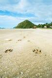 Animal footprints Stock Photography