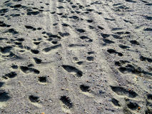 Animal footprints dog human beach Royalty Free Stock Images