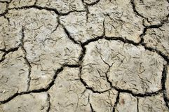 Animal Footprints in a Dried-out Lake Royalty Free Stock Image