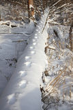 Animal footprints on a fallen tree, in snow. Russia, near Moscow Royalty Free Stock Photo