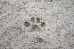 Animal footprints Royalty Free Stock Photos
