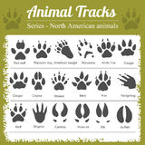 Animal Footprints - North American animals Royalty Free Stock Photography