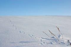 Animal footprints on snow Stock Image