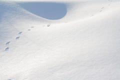 Animal footprints in snow Stock Photo