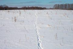 Animal footprints in snow. Wild animal footprints in snow Royalty Free Stock Photos