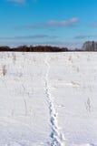 Animal footprints in snow. Wild animal footprints in snow Stock Photos